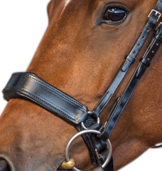 Fairfax Nosebands