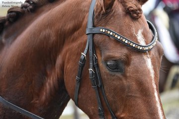 B2F Browbands