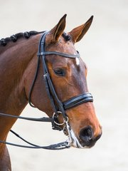 Customized Weymouth Bridles