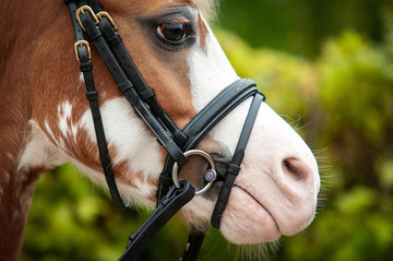 Pony Snaffles