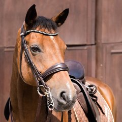 2 in 1 Bridle