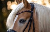 Bling Swing Bordeaux Dream ZA: Magic Tack Wave-browband without loop_