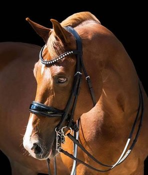 Double Bridle black leather B2F