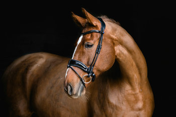 Flying Change DELUXE snaffle bridle PS of Sweden