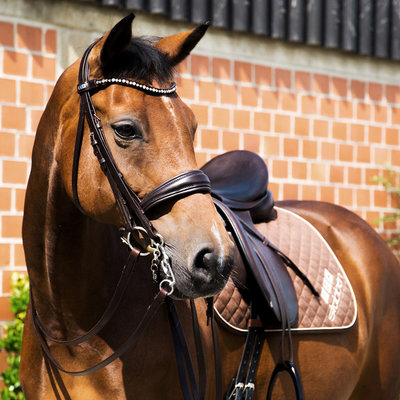 Switch Magic Tack Bridle 2 in 1 Stübben Patent