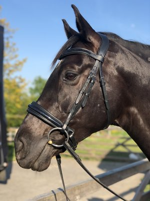 Shine snaffle bridle Black Bridle & Ride WITH flash