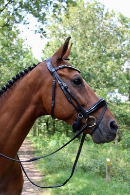 Noseband model S5 with flashstrap loop rolled leather B2F