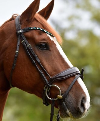 Bling Swing Glossy Green : Magic Tack Wave-browband without loop