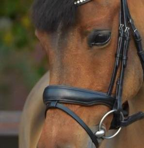Noseband model S1 snaffle with flash strap loop B2F