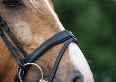 Noseband model S4 snaffle with flash B2F
