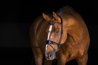 All In snaffle bridle PS of Sweden