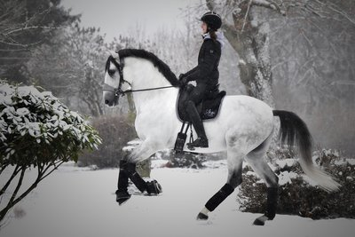 Equibridle Snow Grey Snaffle