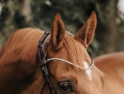 Finesse Metal browband