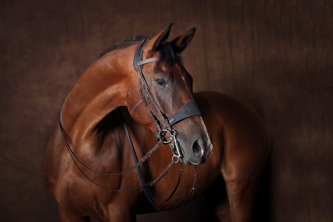 Equibridle Dark Chocolate Weymouth Black